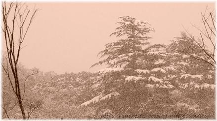 Snow_0203000