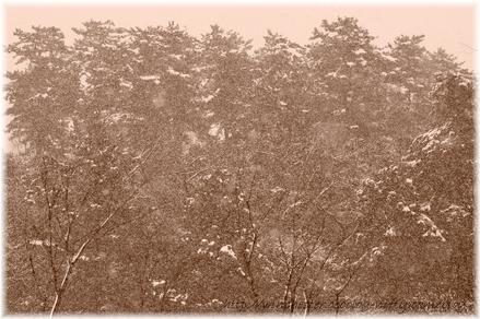 Snow_0203001