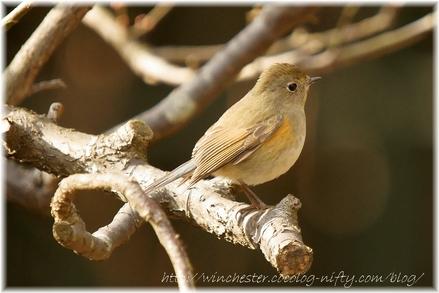 Bird_2008001