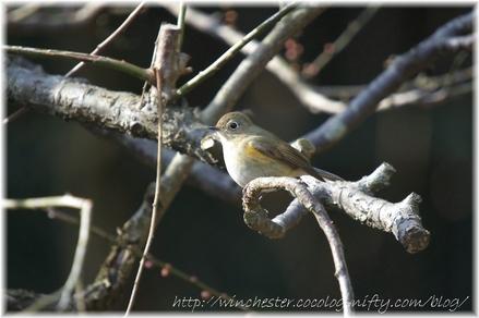 Bird_2008002