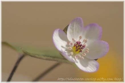 Yukiwarisou_2008001