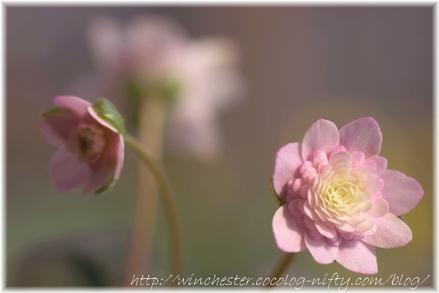 Yukiwarisou_2008014