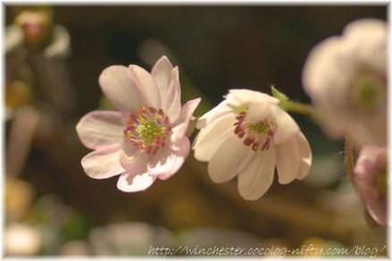 Yukiwarisou_2008009