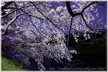 Chidorigahuchi_2008016