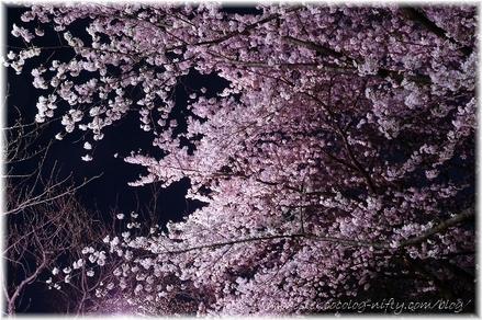 Chidorigahuchi_2008017