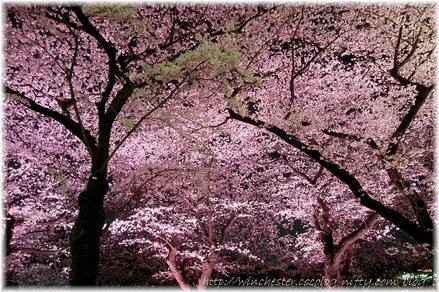 Chidorigahuchi_2008003