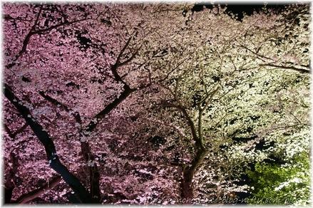 Chidorigahuchi_2008006