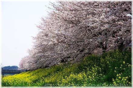 Aogeborigawa_006