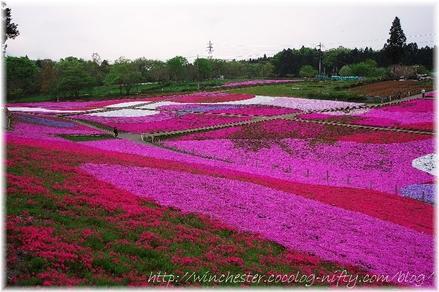 Hitujiyama_2008006
