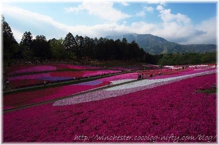 Hitujiyama_2008001