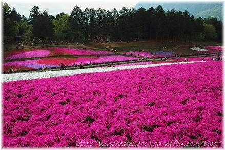 Hitujiyama_2008004