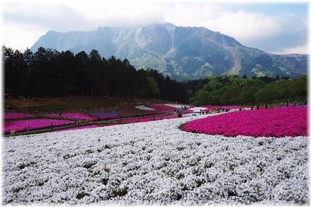 Hitujiyama_2008011