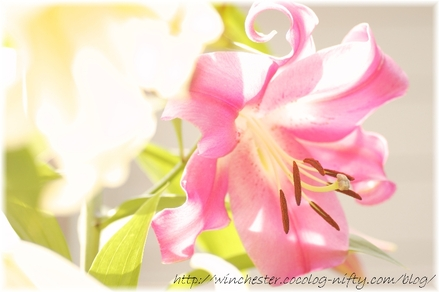 Lily_2008065_2