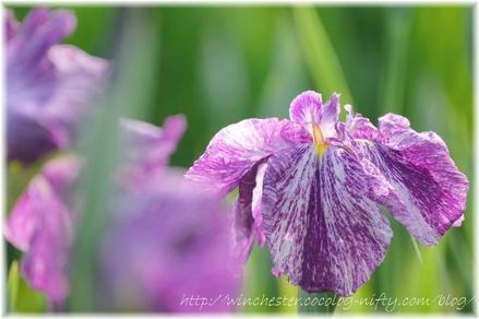 Hanashobu_2008039