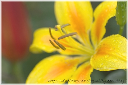 Lily_2008054