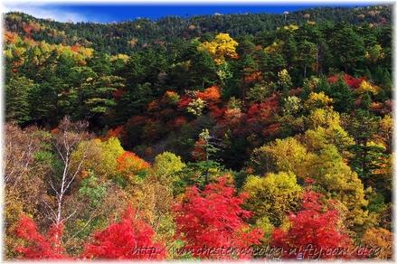 Autumn_leaves_02_012