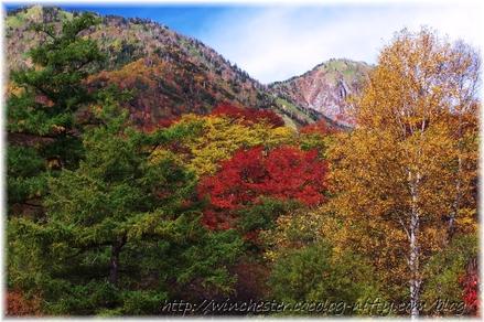Autumn_leaves_02_024