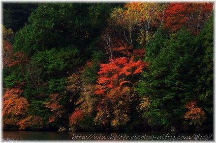 Autumn_leaves_02_013