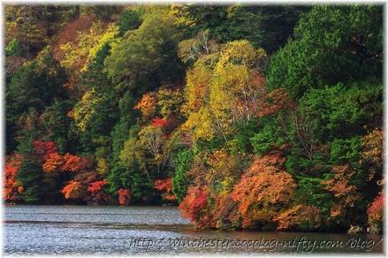 Autumn_leaves_02_019