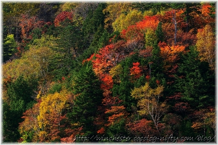 Autumn_leaves_02_021