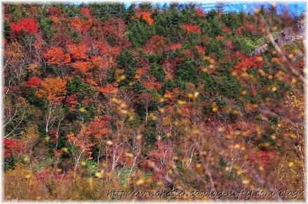 Autumn_leaves_03_006