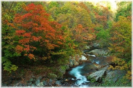 Autumn_leaves_10_004