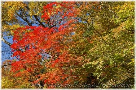Autumn_leaves_10_007