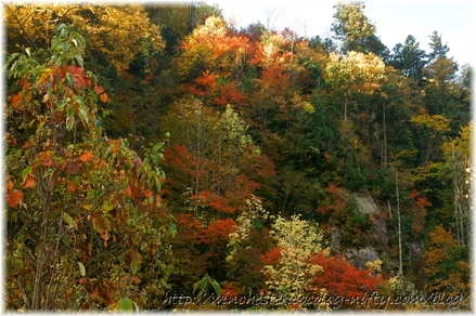 Autumn_leaves_10_008