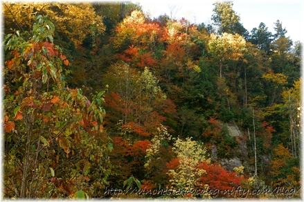 Autumn_leaves_10_008