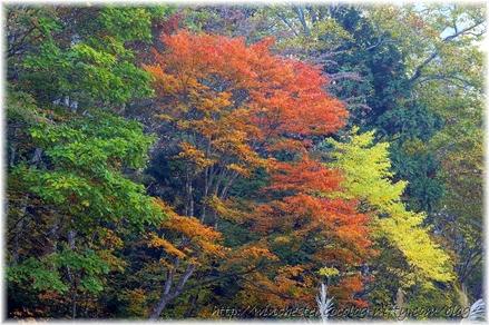 Autumn_leaves_10_027