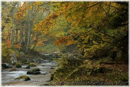 Autumn_leaves_10_012