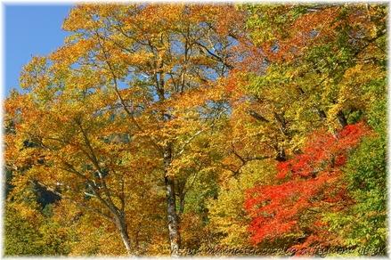 Autumn_leaves_10_036