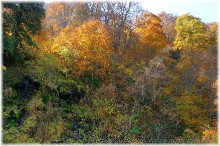 Autumn_leaves_10_049