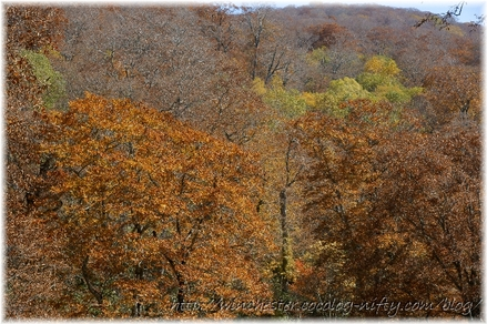 Autumn_leaves_12_002