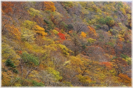 Autumn_leaves_14_004