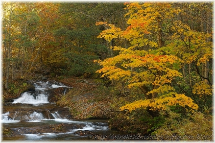 Autumn_leaves_10_026