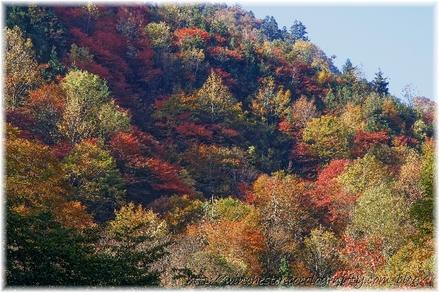 Autumn_leaves_10_031