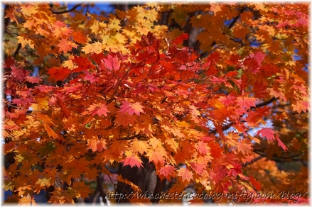 Autumn_leaves_02_029