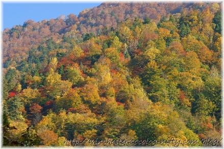 Autumn_leaves_10_033