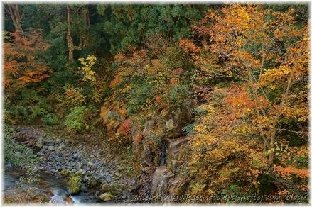Autumn_leaves_10_035