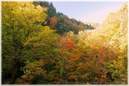 Autumn_leaves_10_043