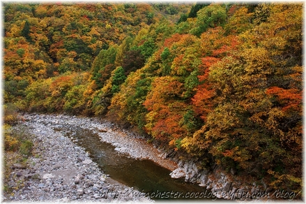 Autumn_leaves_17_013