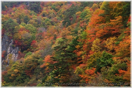Autumn_leaves_17_014