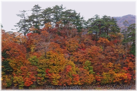 Autumn_leaves_18_002