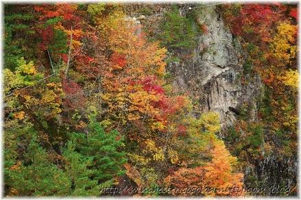 Autumn_leaves_18_004