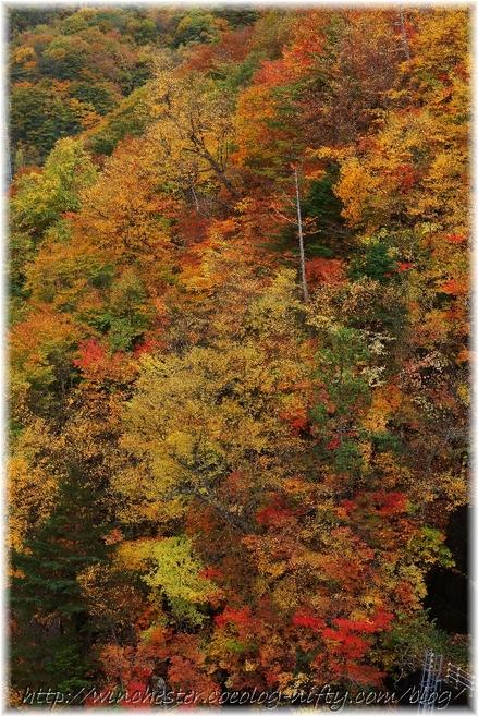 Autumn_leaves_18_012