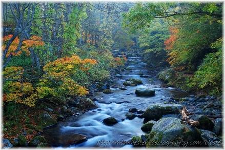 Autumn_leaves_10_028