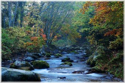 Autumn_leaves_10_055