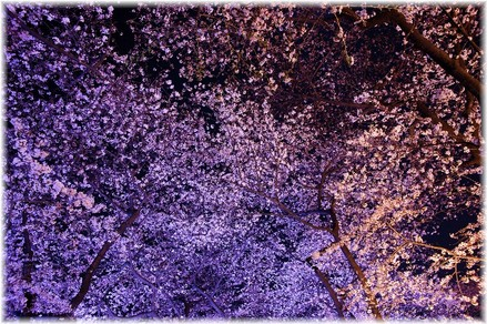 Chidorigahuchi_2009003