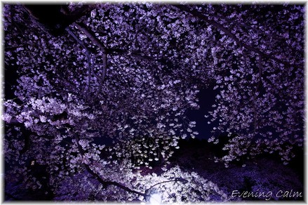 Chidorigahuchi_2009005